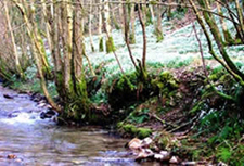 Snowdrop Valley on Exmoor